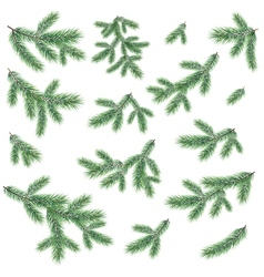 Branches a christmas tree vector
