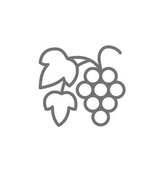 grape branch with berries line icon vector image