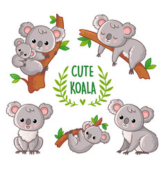 with koala in various poses vector image