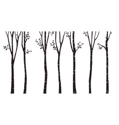 Birch tree silhouette background vector