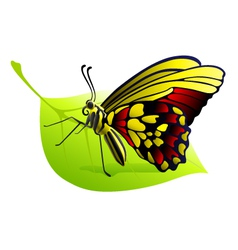 butterfly on a leaf vector image