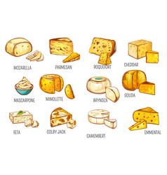 cheese types sketch dairy food products icons vector image