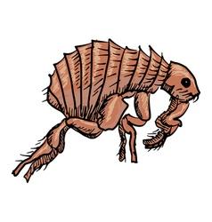 flea vector image
