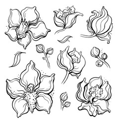 Floral pattern with orchids hand drawn vector