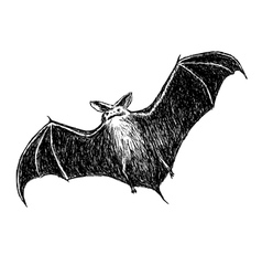 Flying bat vector image