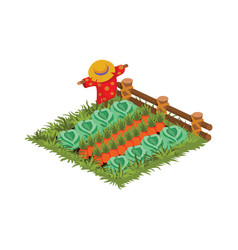 Isometric cartoon vegetable garden bed planted vector
