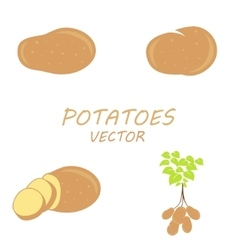 Potatoes icons set vector