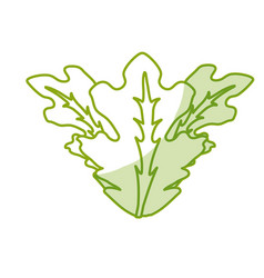 Silhouette delicious leaves lettuce organ food vector