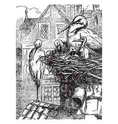 The storks vintage vector
