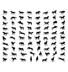 black silhouettes horses vector image