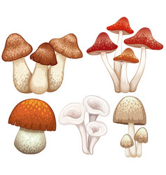 different types of mushrooms on white background vector image