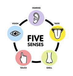 Five senses line icons human ear and eye symbols vector