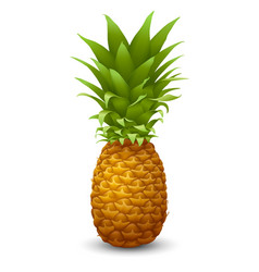 Fresh ripe pineapple vector