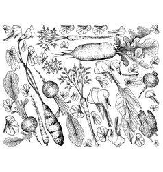 Hand drawn of root and tuberous vegetables backgro vector