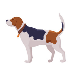 Hunting dog scent hound breed flat vector