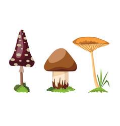 mushroom and toadstool vector image