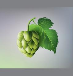 Realistic beer green hop cones leaves vector