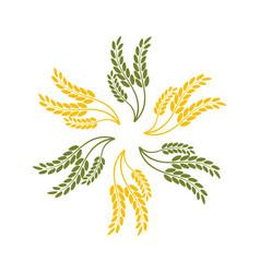 Wheat oats logo vector