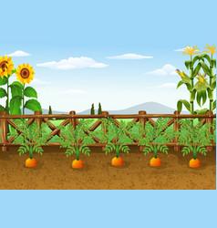 cartoon carrots growing in garden vector image