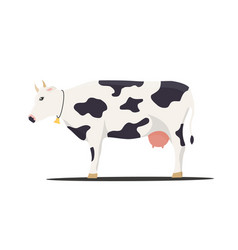 cow on white background vector image