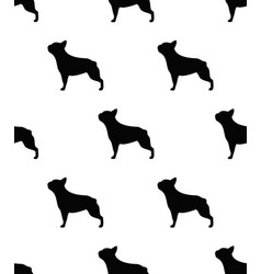 frenchie seamless pattern vector image
