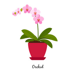 Orchid plant in pot vector