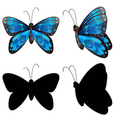 Silhouette butterfly in two positions vector