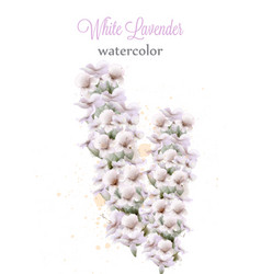 White lavender watercolor flowers isolated vector