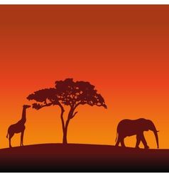 African Safari Silhouette Background vector image