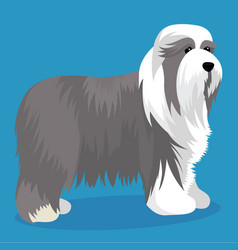 Bearded collie dog vector