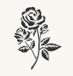 Black hand drawn roses engraving vector