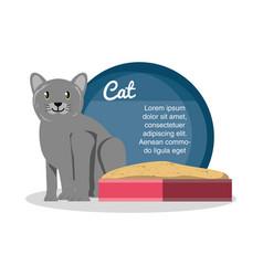 cat on sandbox icon vector image