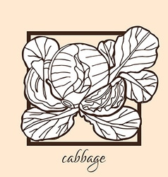 hand drawn cabbage vector image