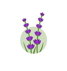 Lavender logo vector image