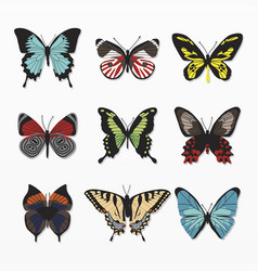 variety colorful butterfly set vector image