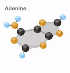 Dna nucleotides-4 adenine a pyrimidine vector