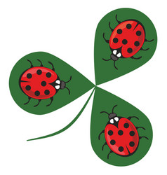 Shamrock wiht three ladybugs three little red vector