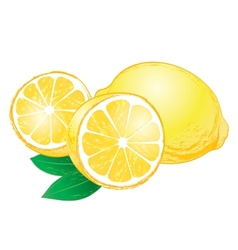 lemons with leaves vector image vector image