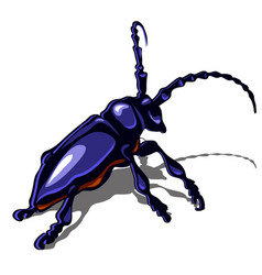 a big blue beetle isolated on a white background vector image