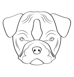 isolated pitbull avatar vector image