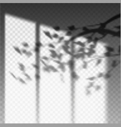 plant branch or leaf shadow on transparent wall vector image