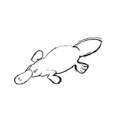 Platypus drawing engraving vector