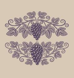 Vintage a grape branch vector