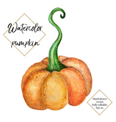 watercolor pumpkin isolated on white vector image