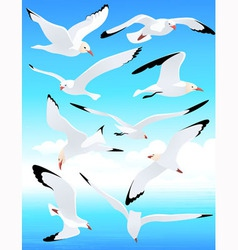 Sea gull set vector image vector image