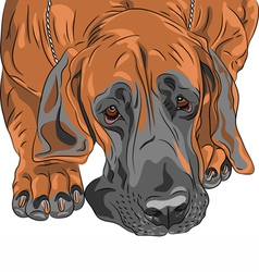 sad dog Great Dane vector image vector image