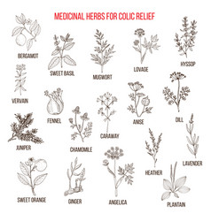 best herbal remedies for colic relief vector image
