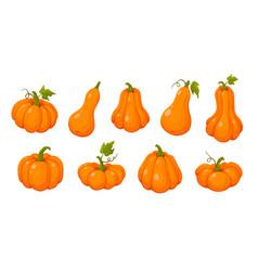 colorful pumpkins set vector image