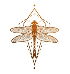 Dragonfly and geometric elements vector image