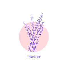 hand drawn lavender logo isolated on white vector image